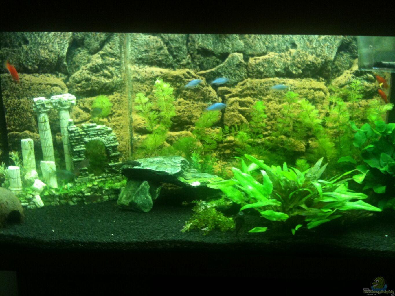 Aquarium von michael geiger mein erstes aq for Mein aquarium