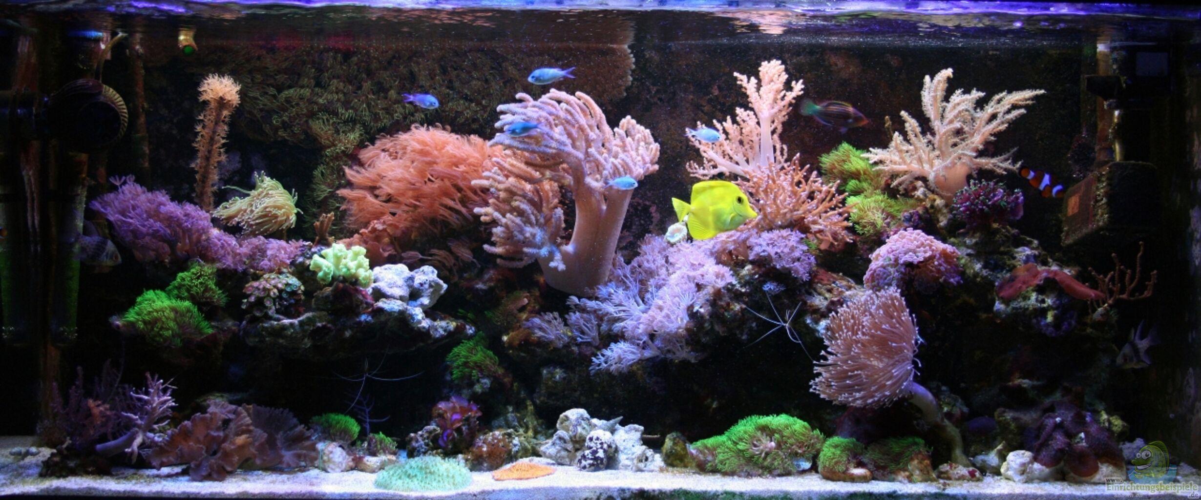 Aquarium von johannes 88 mein kleines riff for Aquarium 120x40x50