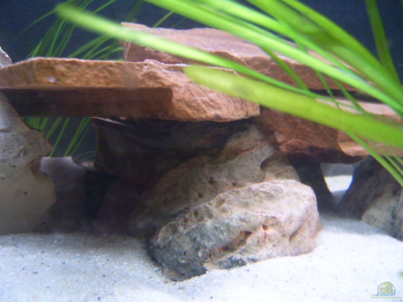 aquarium von dominik losinzky becken 2422. Black Bedroom Furniture Sets. Home Design Ideas