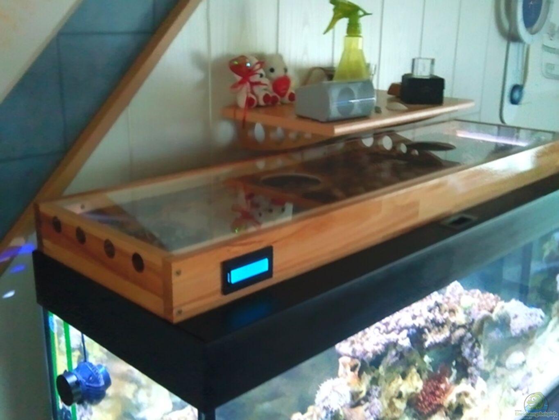 aquarium von dirk sch fer becken 24250. Black Bedroom Furniture Sets. Home Design Ideas