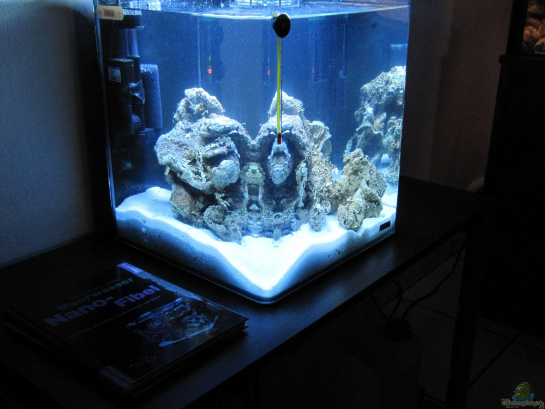 aquarium von haens84 littel ozean. Black Bedroom Furniture Sets. Home Design Ideas