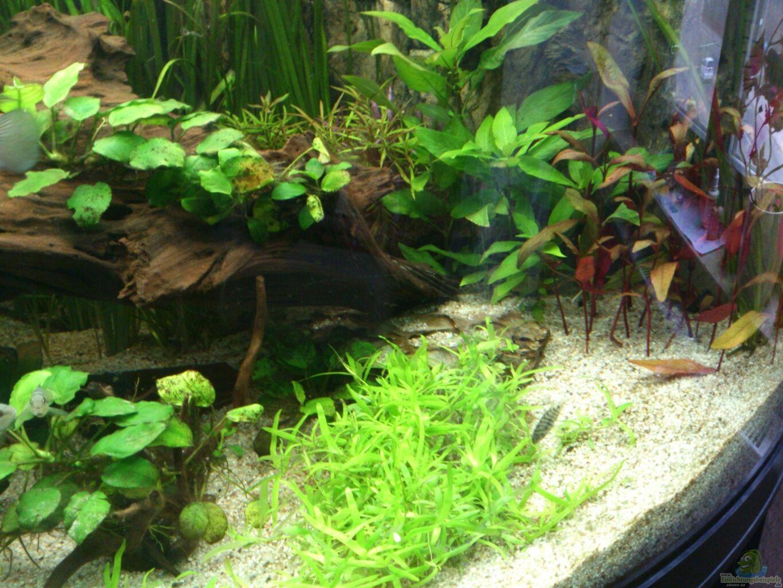 aquarium von piet82 trigon 350. Black Bedroom Furniture Sets. Home Design Ideas