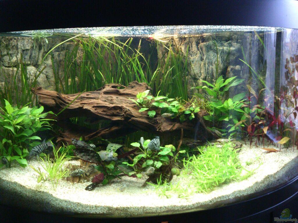 Aquarium von piet82 trigon 350 for Aquarium 350 litres