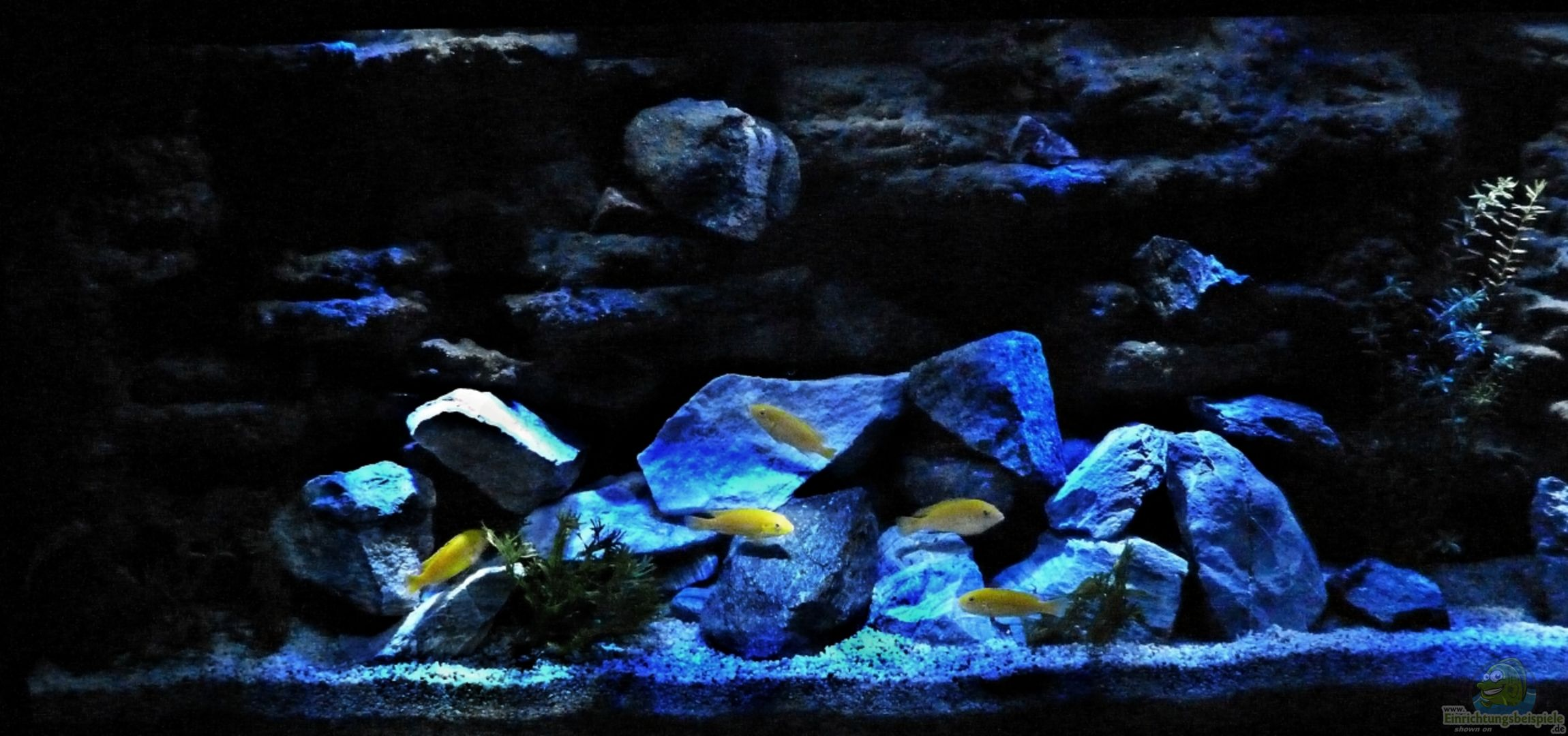 aquarium von ren l 24264 malawi becken. Black Bedroom Furniture Sets. Home Design Ideas