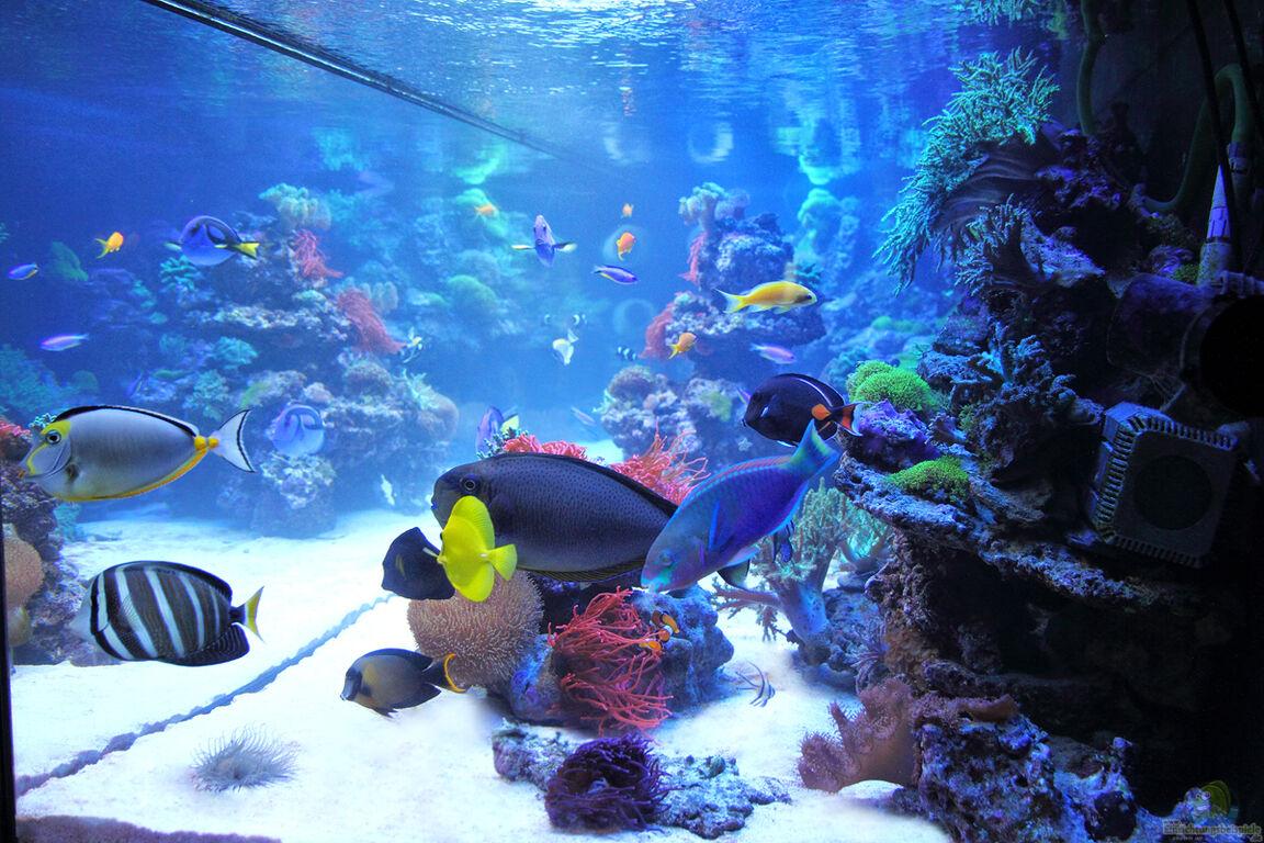 aquarium von marco r misch becken 24291. Black Bedroom Furniture Sets. Home Design Ideas