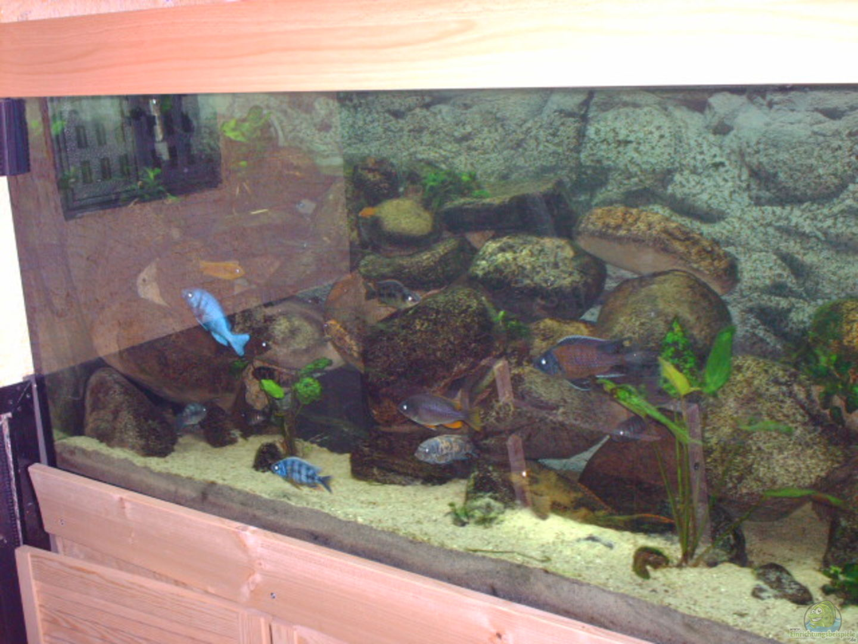 aquarium von jens szymaniak becken 2435. Black Bedroom Furniture Sets. Home Design Ideas