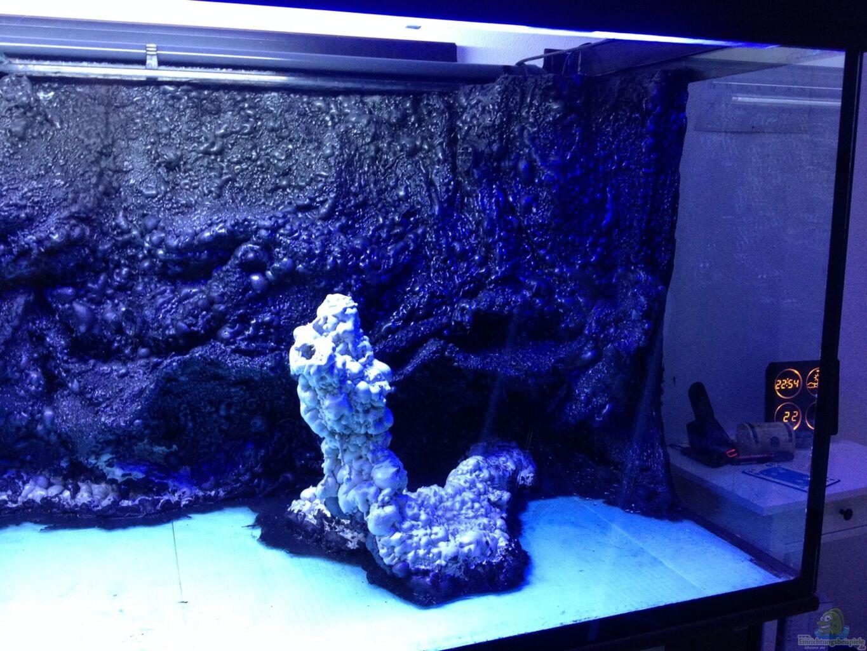 Aquarium vulcan aquarium von thomas schneider vulcano reef for Aquarium wurzel