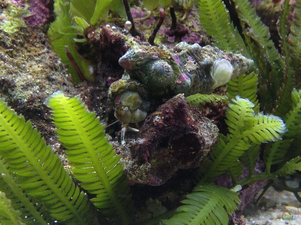 Aquarium vulcan aquarium vulcan aquarium von thomas for Aquarium wurzel