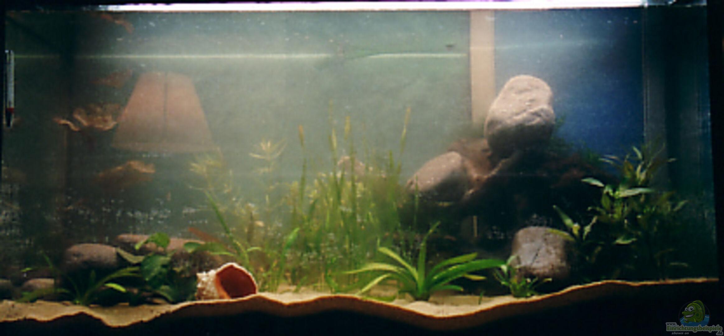 aquarium von ingo hornung becken 2437. Black Bedroom Furniture Sets. Home Design Ideas