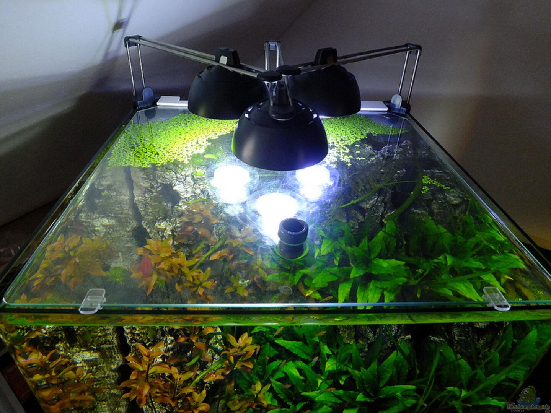 aquarium von avronaut 24528 cube 60. Black Bedroom Furniture Sets. Home Design Ideas