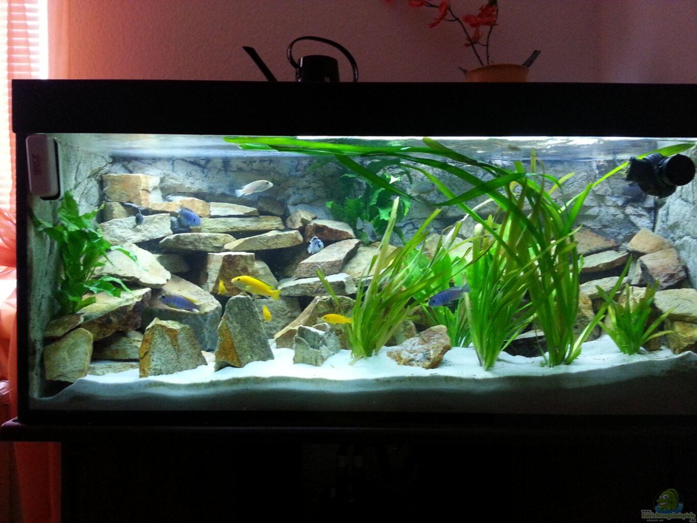 aquarium von afra malawi. Black Bedroom Furniture Sets. Home Design Ideas