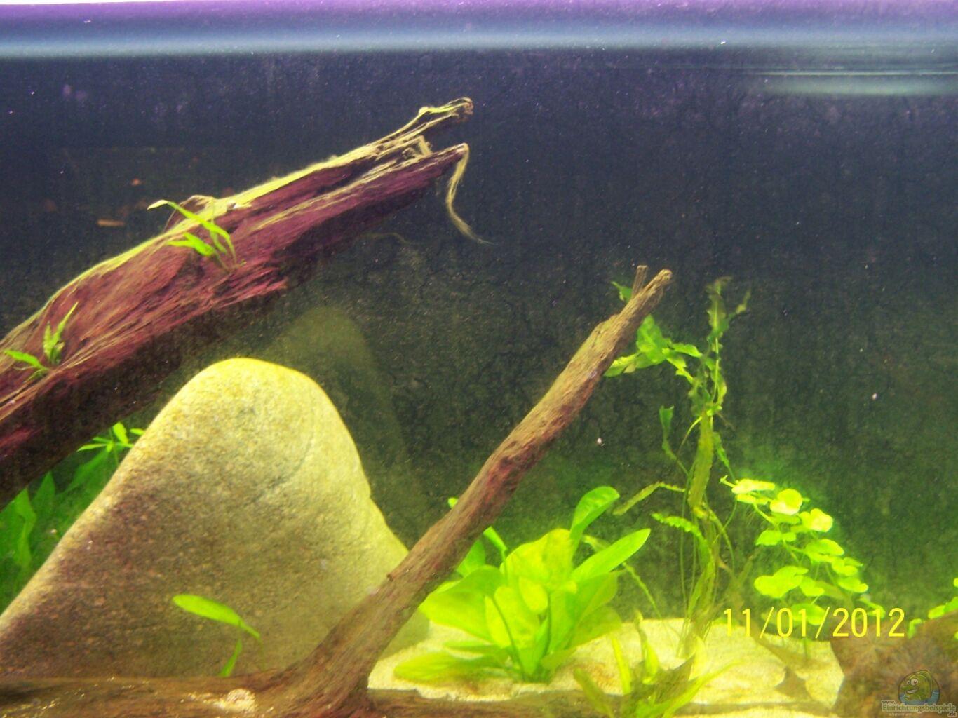 aquarium von stefan arenth becken 24596. Black Bedroom Furniture Sets. Home Design Ideas