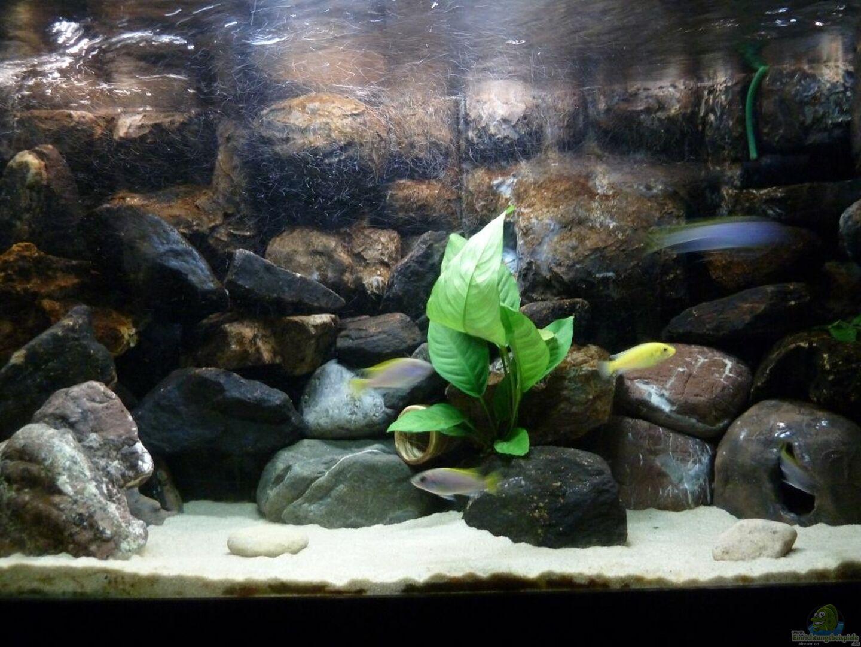 aquarium von der michel 24632 malawibecken. Black Bedroom Furniture Sets. Home Design Ideas