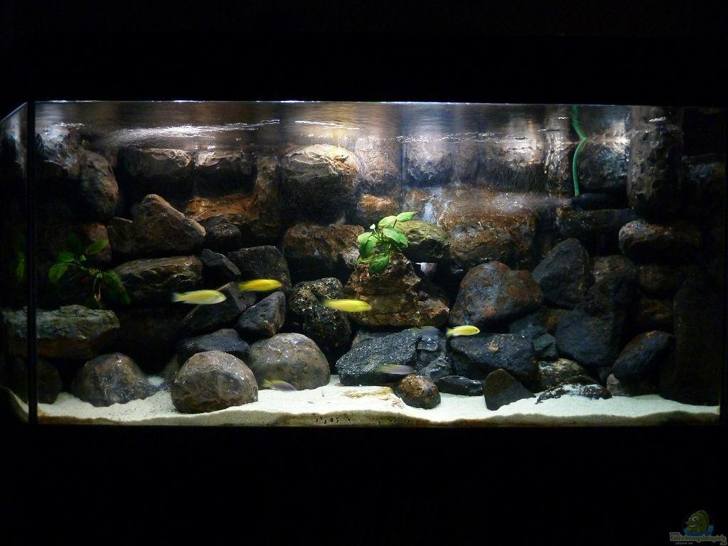 aquarium von der michel malawibecken. Black Bedroom Furniture Sets. Home Design Ideas
