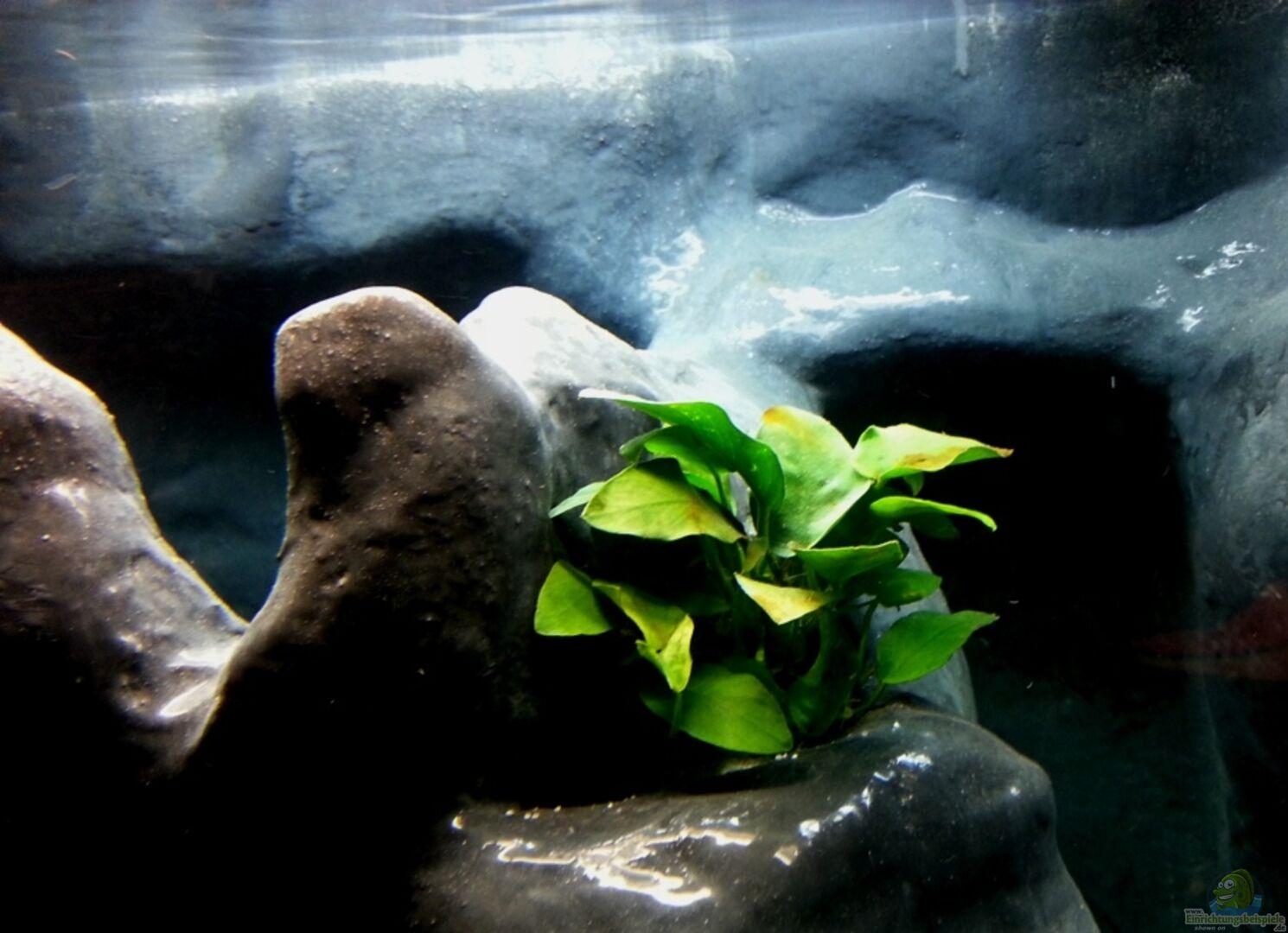 aquarium von michael boeck 24733 450 liter malawi. Black Bedroom Furniture Sets. Home Design Ideas