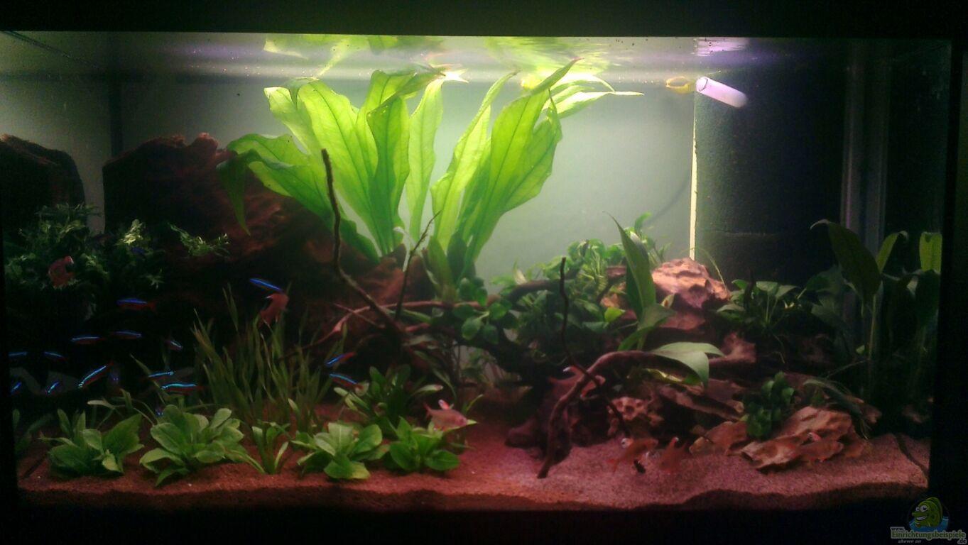 Aquarium von der sebastian miniatur amazonien for Zierfische hannover