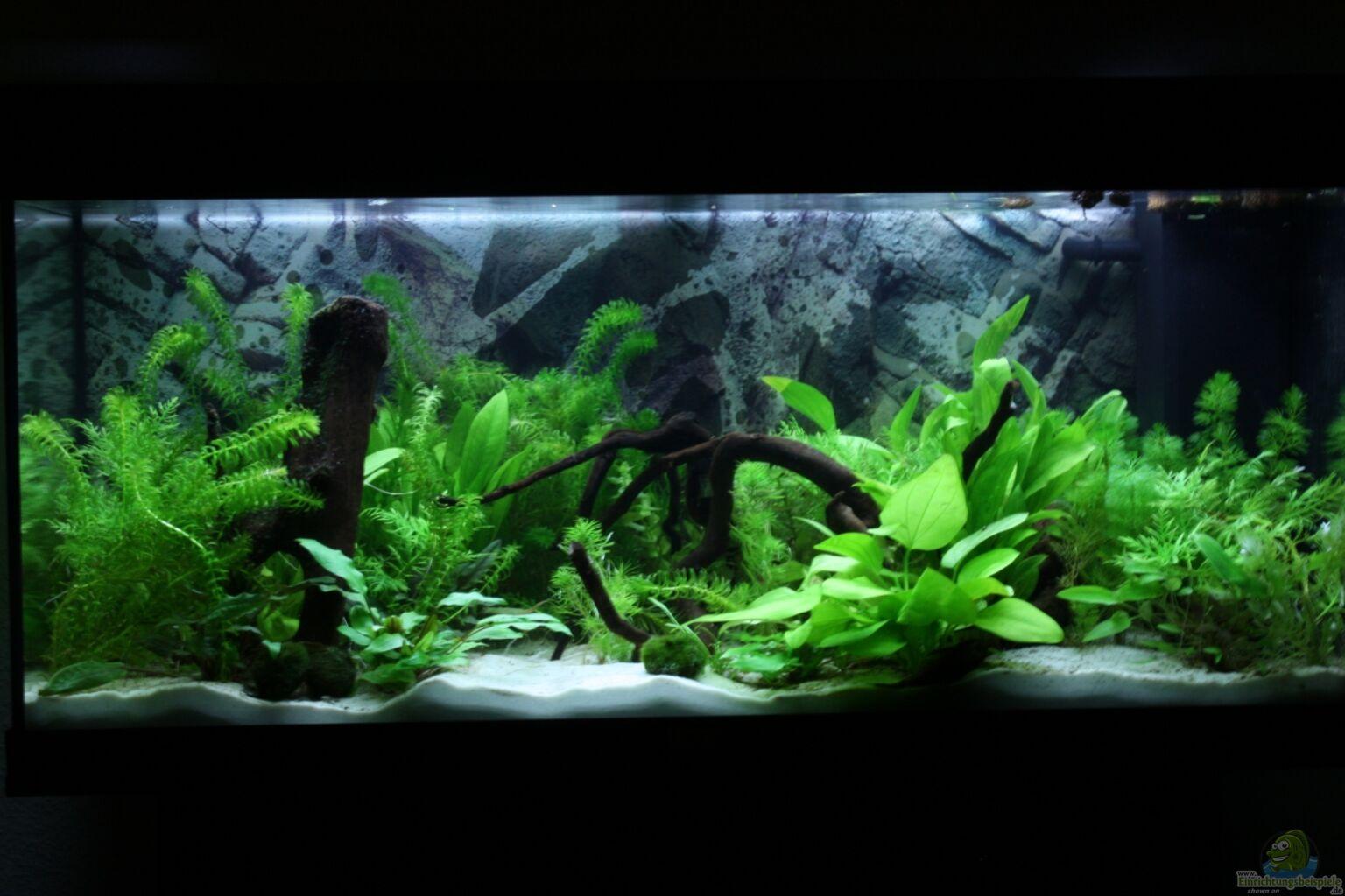 aquarium von manuela unterwasser urwald. Black Bedroom Furniture Sets. Home Design Ideas