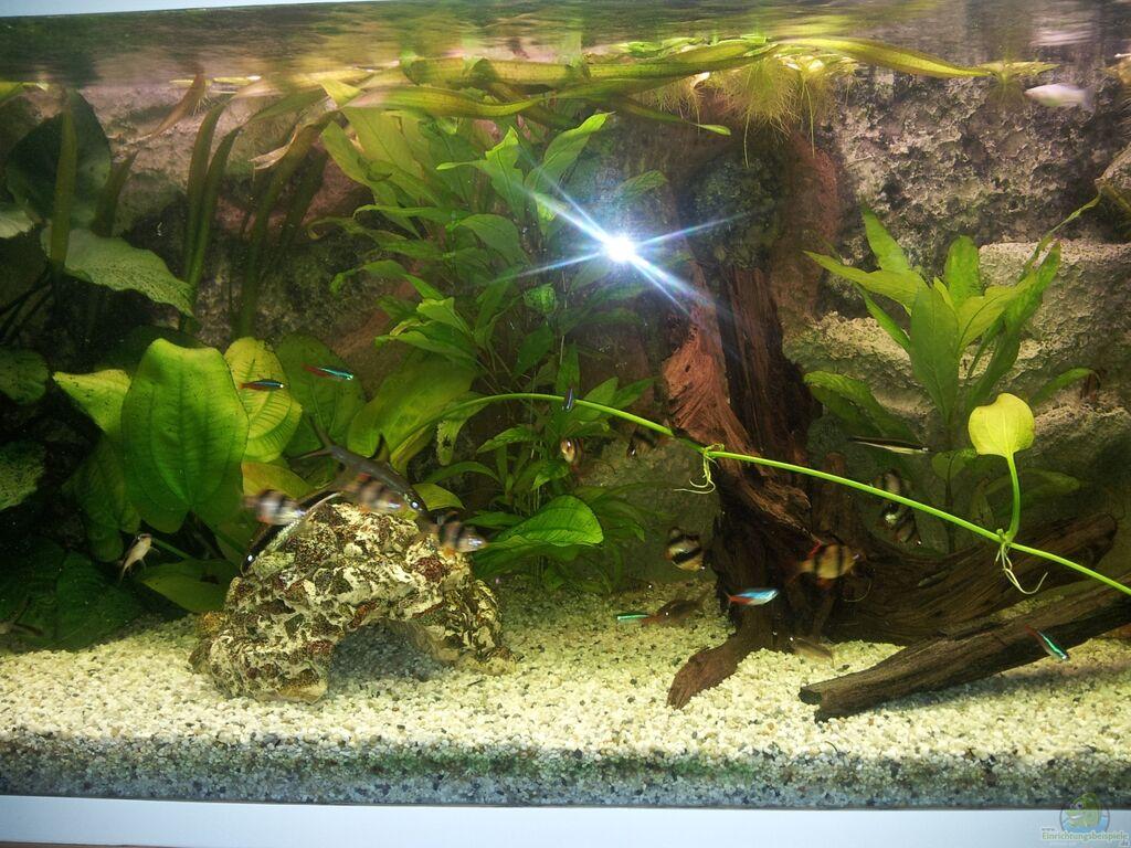 aquarium von steve juwel rio 180. Black Bedroom Furniture Sets. Home Design Ideas