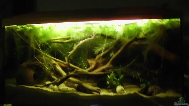Aquarium von nils m ller 112l wurzel jungel for Aquarium wurzel