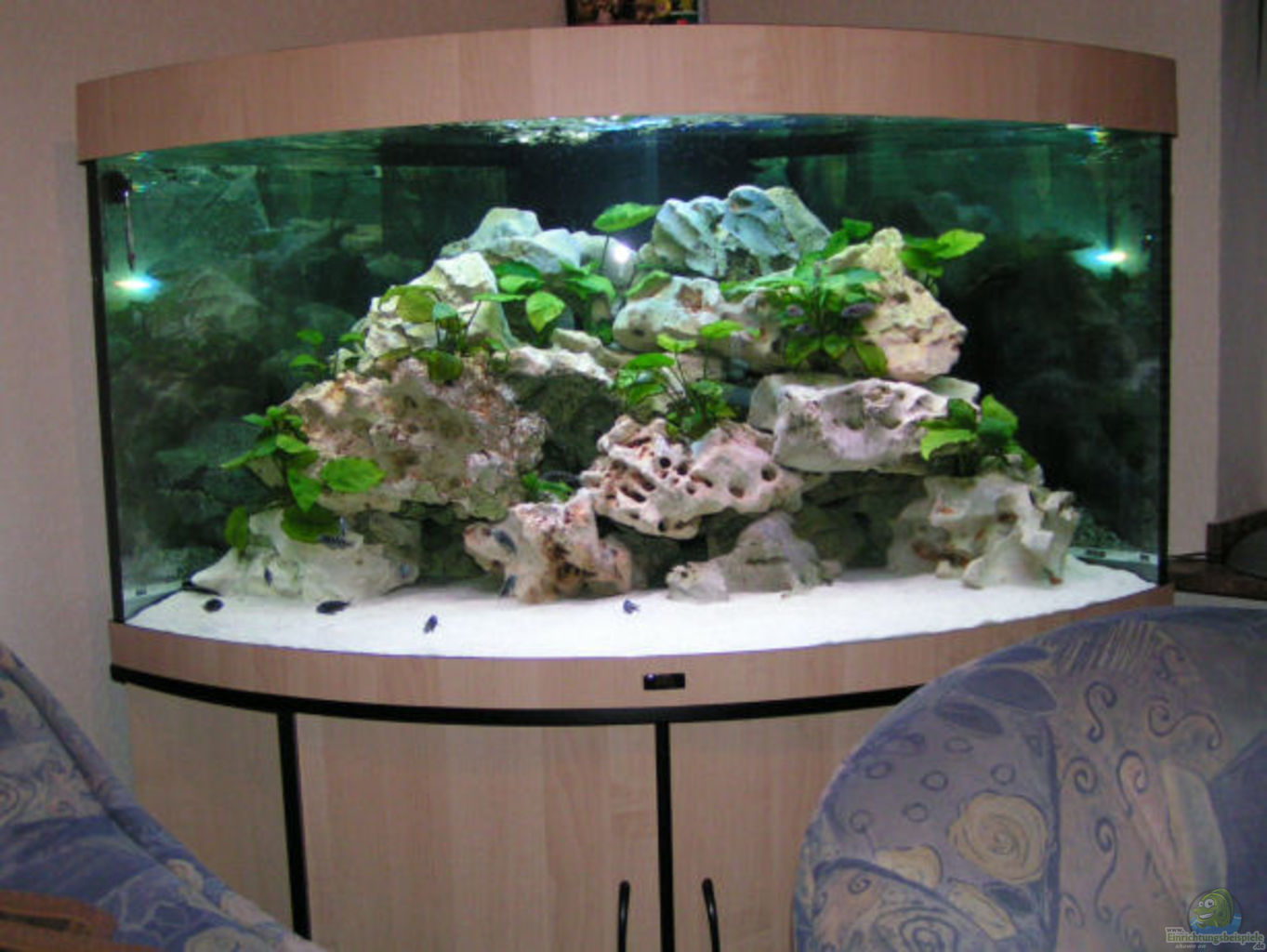 aquarium von dirk ramoue becken 2495. Black Bedroom Furniture Sets. Home Design Ideas