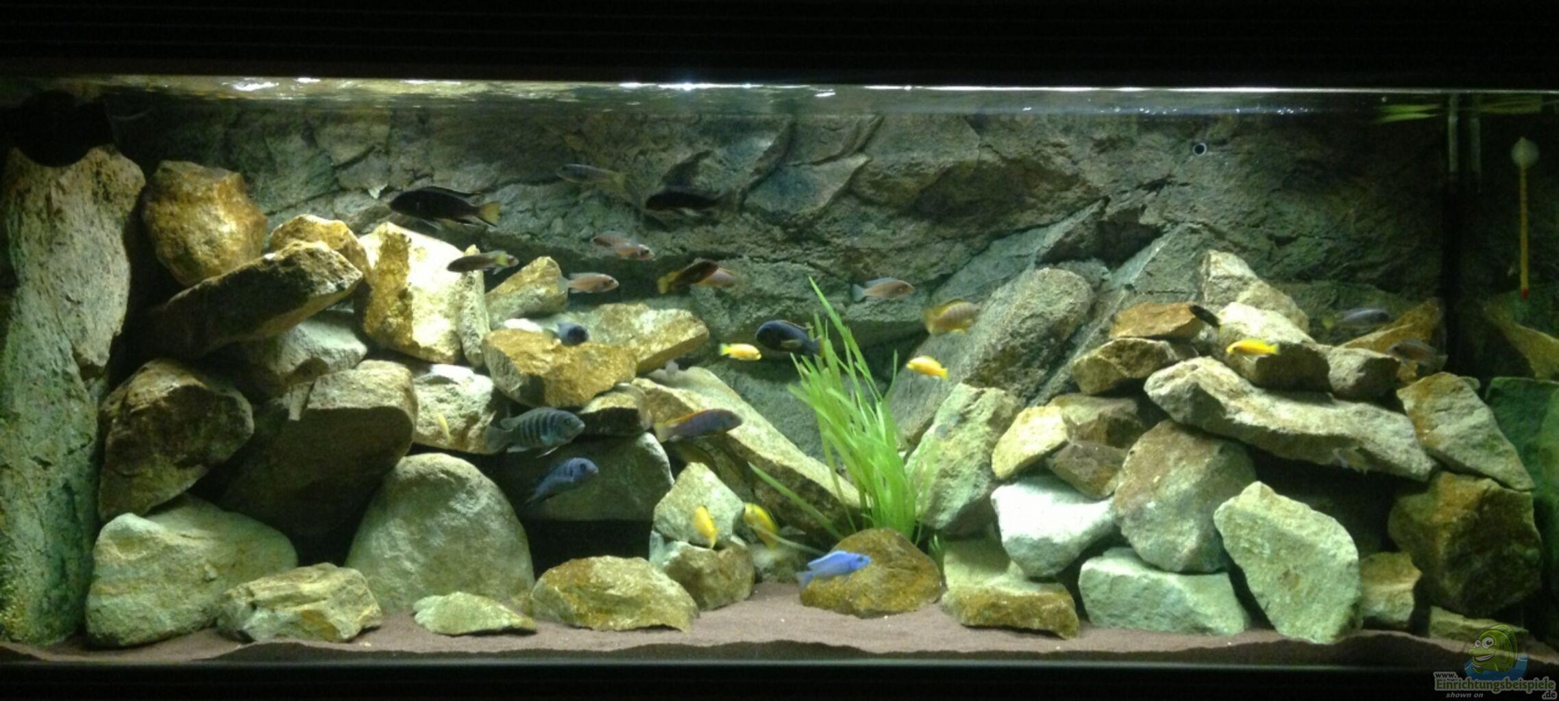aquarium von green zebra mbuna rocks. Black Bedroom Furniture Sets. Home Design Ideas