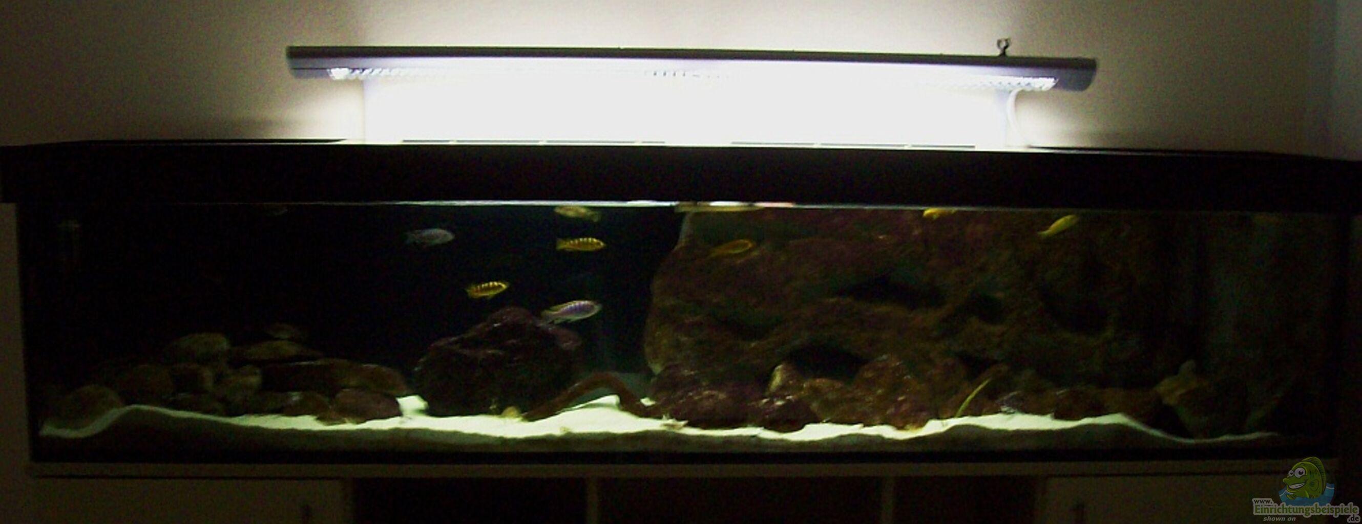 aquarium von eginger malawi nur noch als beispiel. Black Bedroom Furniture Sets. Home Design Ideas
