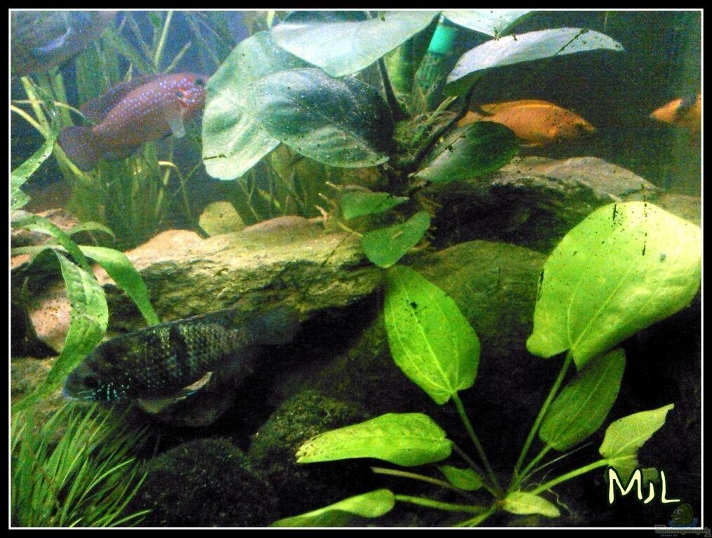 aquarium von mariajudyta barschbecken. Black Bedroom Furniture Sets. Home Design Ideas