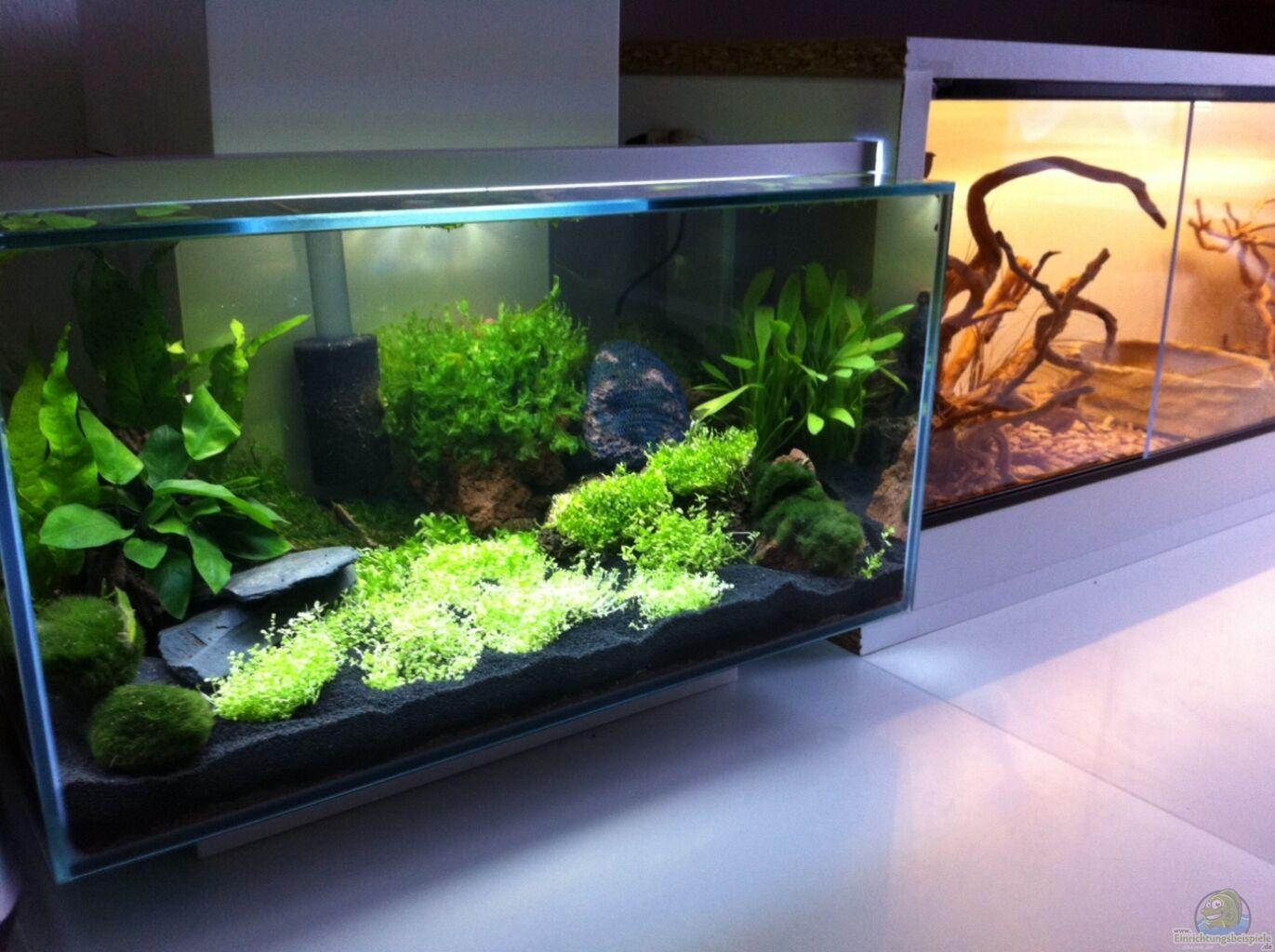 Example no 25192 from the category invertebrates for Aquarium edge