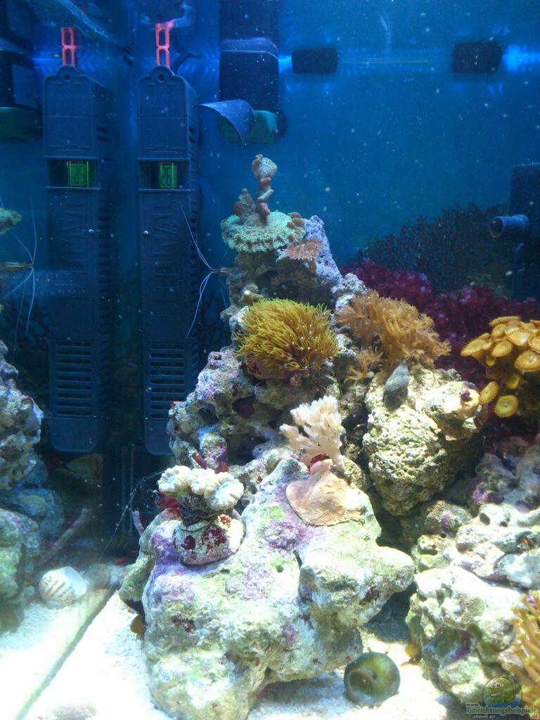 Aquarium von dirk pfeifer salzwasser w rfel for Salzwasser aquarium