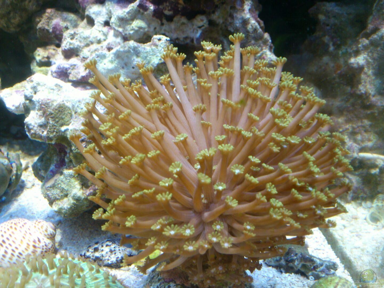 Aquarium salzwasser w rfel aus salzwasser w rfel von dirk for Salzwasser aquarium