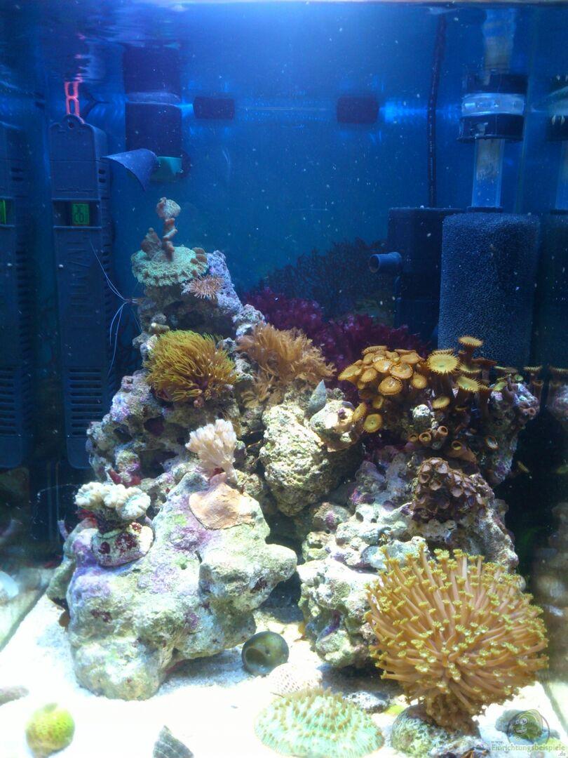 Aquarium von dirk pfeifer 25223 salzwasser w rfel for Salzwasser aquarium