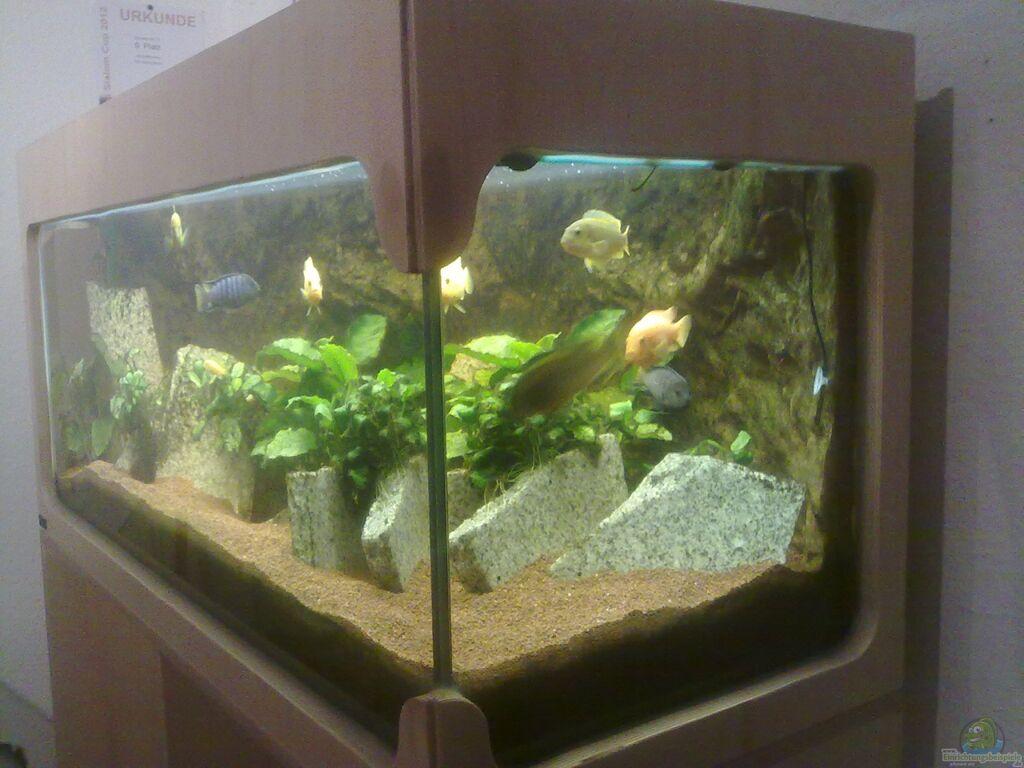 aquarium von fischer vom bodensee 300er eigenbau. Black Bedroom Furniture Sets. Home Design Ideas