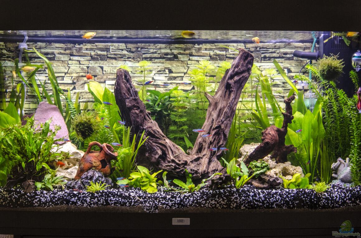 aquarium von desperado juwel vision 180. Black Bedroom Furniture Sets. Home Design Ideas