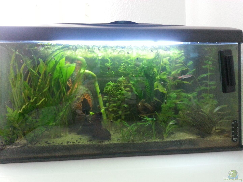 Aquarium von parlak ufuk 25293 mein erstes aquarium for Mein aquarium