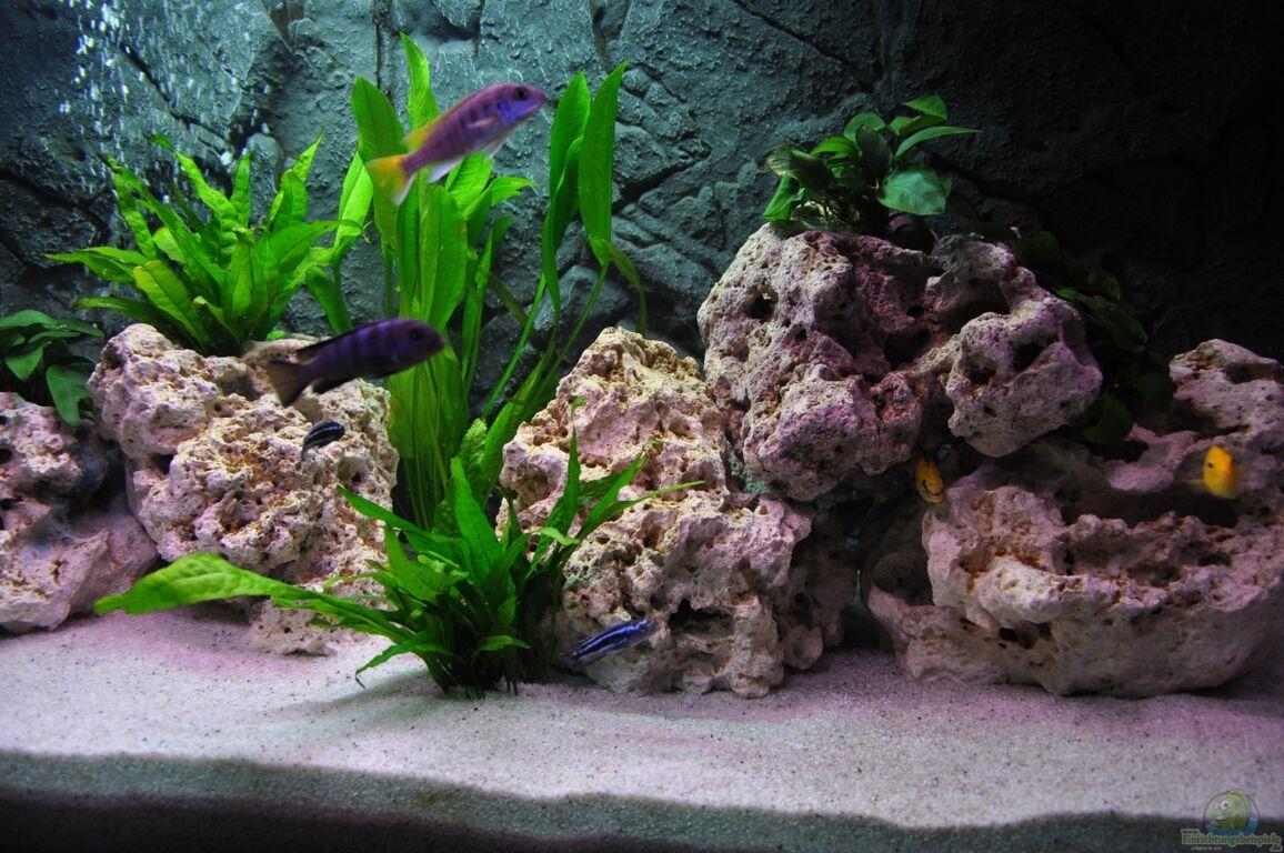 aquarium von andr b mein erstes malawi becken. Black Bedroom Furniture Sets. Home Design Ideas