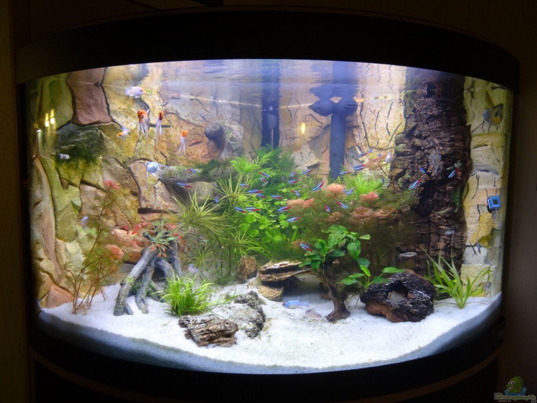 aquarium von maik h unser venezia 190. Black Bedroom Furniture Sets. Home Design Ideas