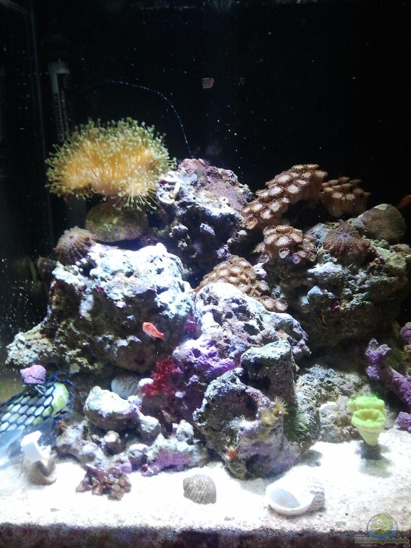 aquarium von borito 25382 nano meerwasser 30er. Black Bedroom Furniture Sets. Home Design Ideas