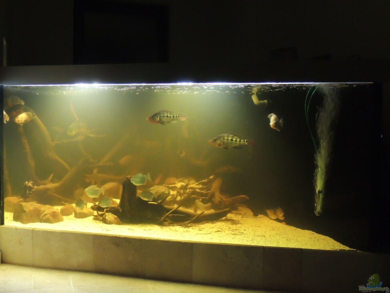 aquarium trüb