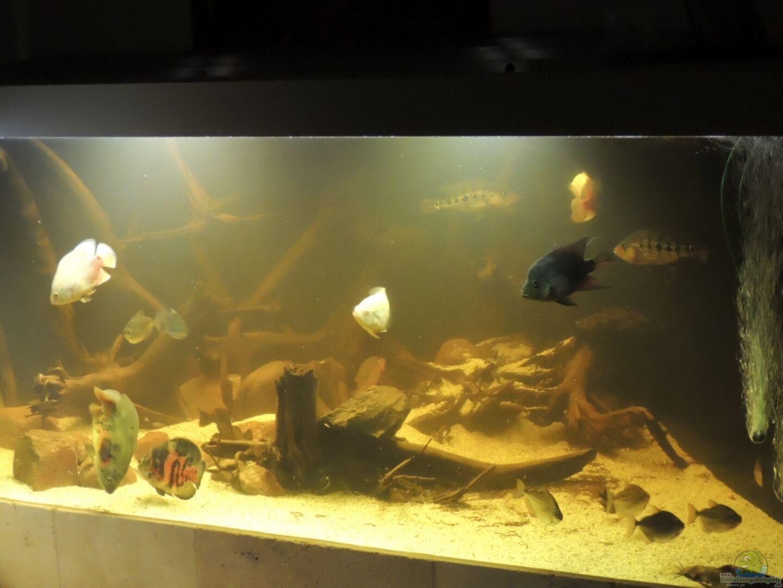 aquarium von nico beyer 25424 eckaquarium. Black Bedroom Furniture Sets. Home Design Ideas