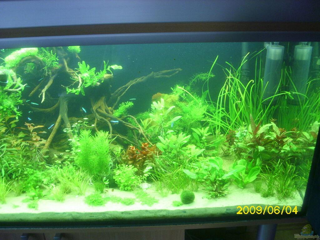 aquarium von herbert baier becken 25448. Black Bedroom Furniture Sets. Home Design Ideas