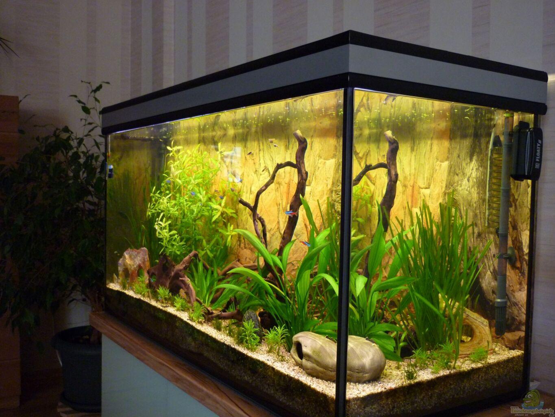 aquarium von matrou becken 25584. Black Bedroom Furniture Sets. Home Design Ideas