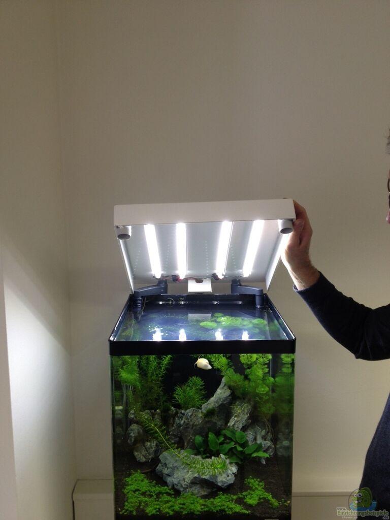 льют мотивированный какой нано аквариум выбрать на приятель принес