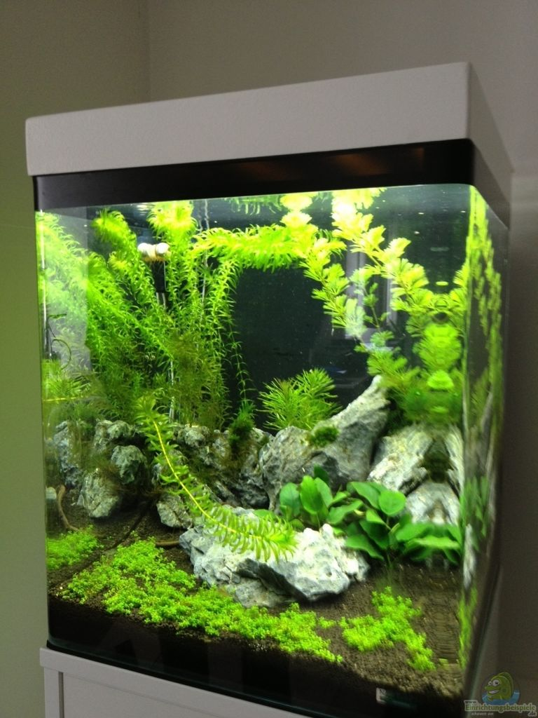 aquarium von anton nano cube 60l. Black Bedroom Furniture Sets. Home Design Ideas