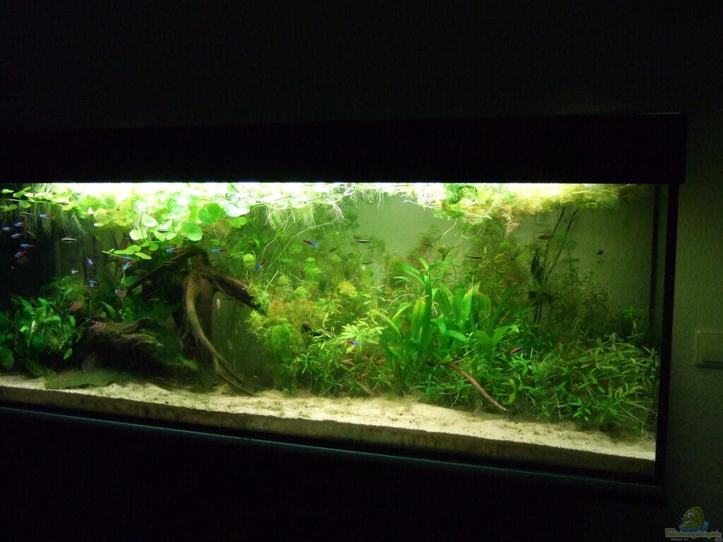 Aquarium Wohnzimmer Dekoration : Aquarium von süsswasserskipper amazonas im wohnzimmer