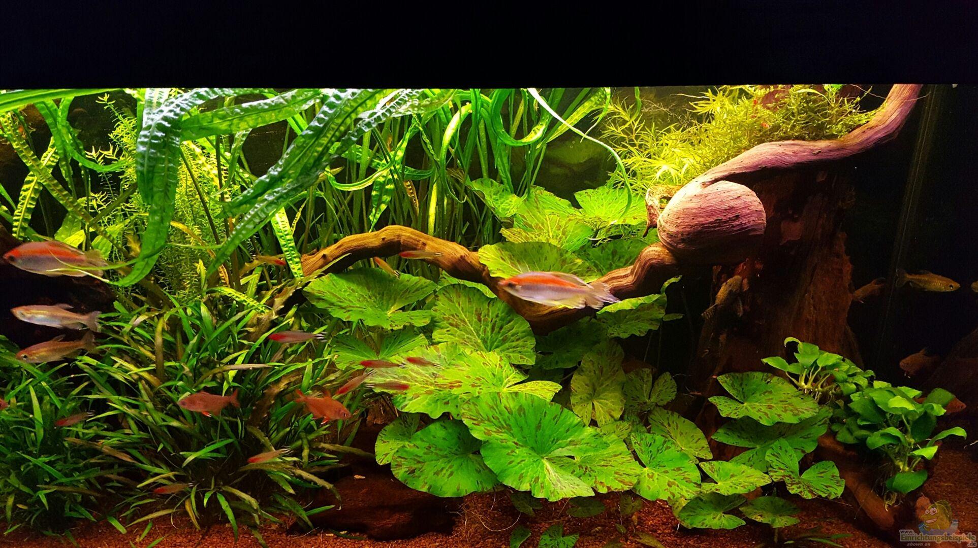 aquarium von bluebabs becken 2564