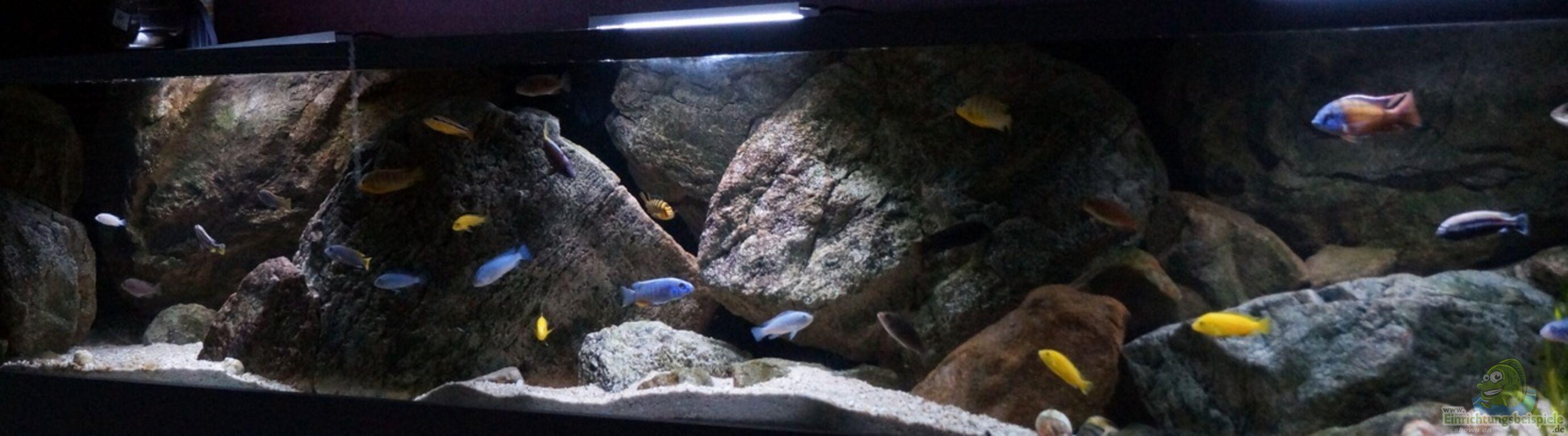 Aquarium Von Thetoxicavenger Pakati Pa Miyala