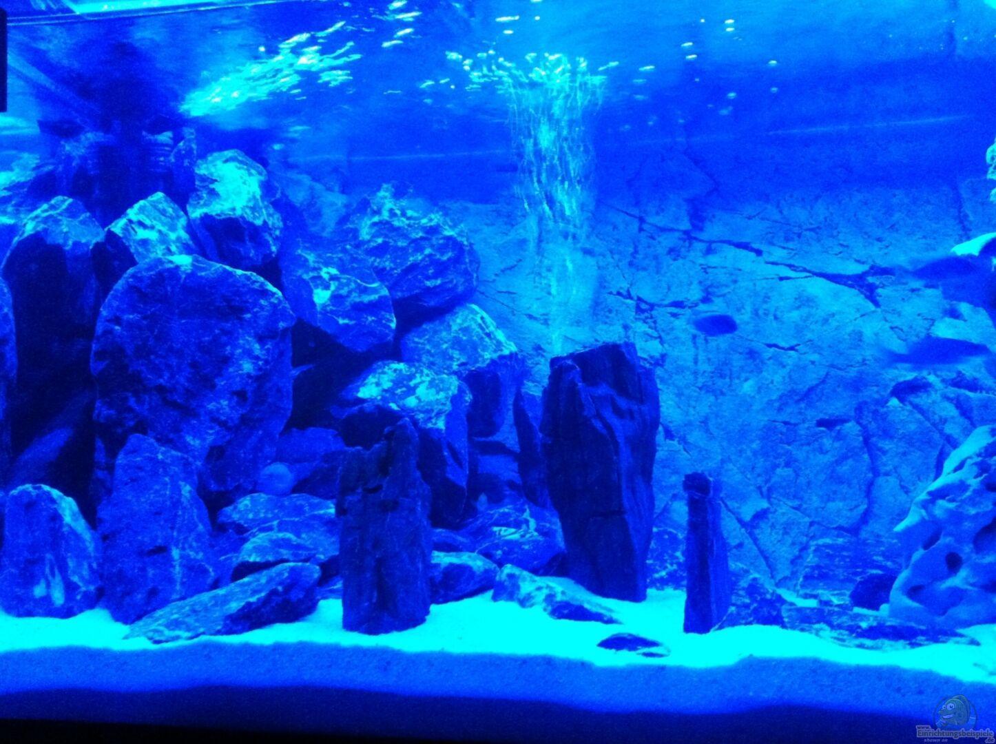 Aquarium von neues becken 720 l becken 25658 for Aquarium becken