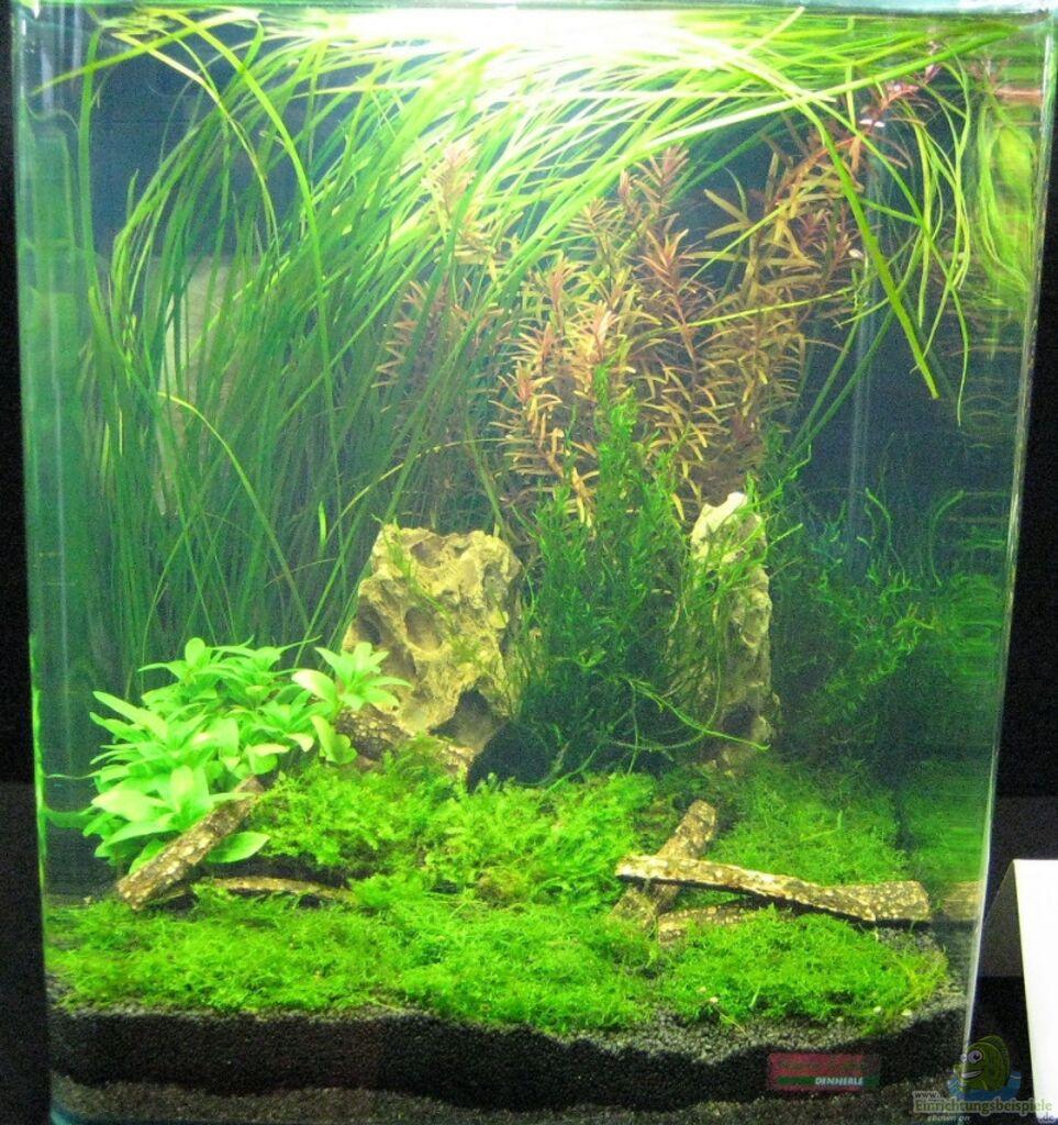 Wettbewerb bepflanzte aquarien fotos nano teil 1 for Zierfische hannover