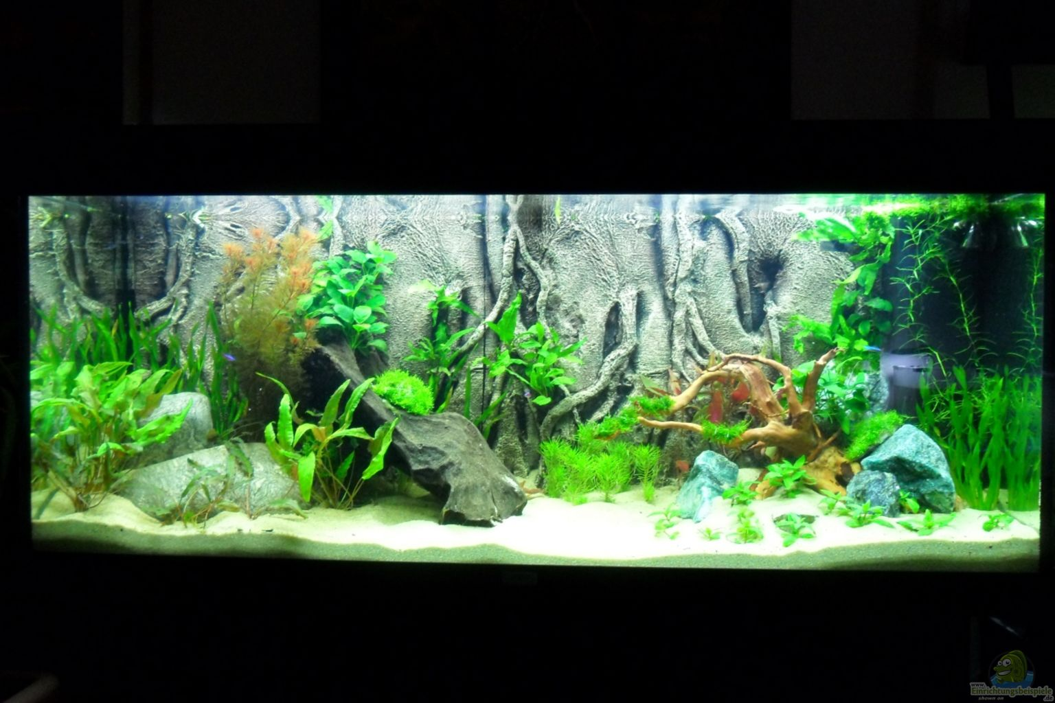 Aquarium von morro asiawood for Aquarium 120x40x50