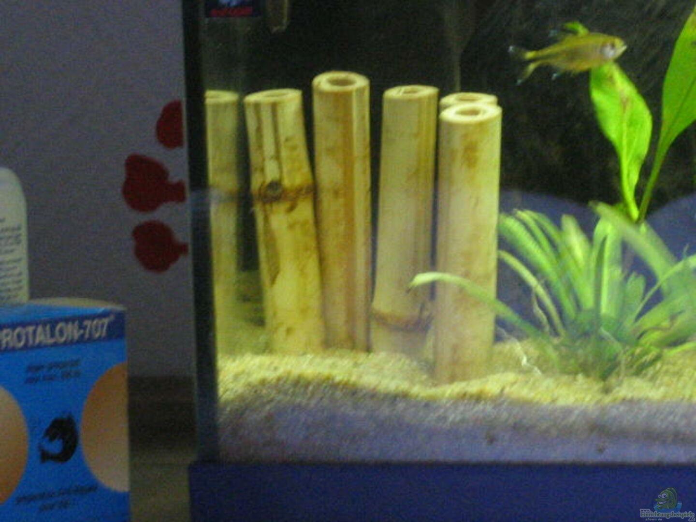 Bambus Aus Becken 2575 Von Dennis Hohnisch